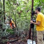Měření struktury dřevin v primárním tropickém lese v Bruneji (září 2011, foto M. Svátek)