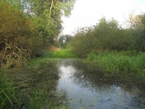 Mrtvé rameno řeky Blanice u Myšence (Protivín)
