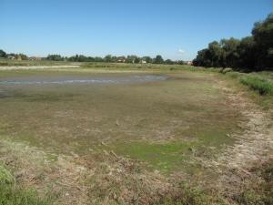 Odchovný areál Ostrov u Čejkovic, letněný rybníček č. 4