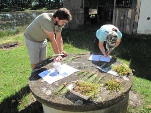 Odchovný areál Ostrov u Čejkovic, měření rostlin