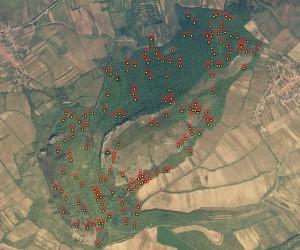 Satelitní obrázek lesa s opakovanými plochami